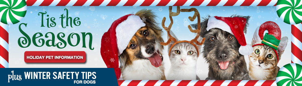 Holiday Pet Information and Safety Tips