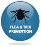 Flea & Tick Prevention